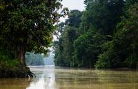 Jungle of Borneo